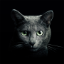 icon Find a Cat